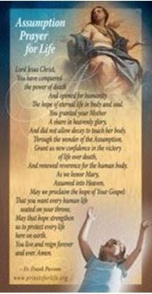 Picture of Assumption Novena for Life Prayer Card